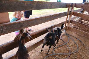 child goat petting zoo