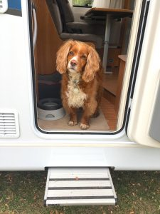 dog in a campervan rv door