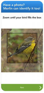 merlin bird id bird watching app for iphone android rv