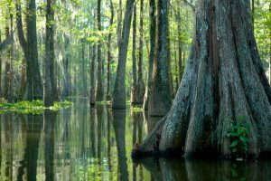 cypress tree bayou louisiana jean lafitte national park new orleans swamp rv camping