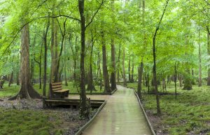 congaree national park south carolina swamp