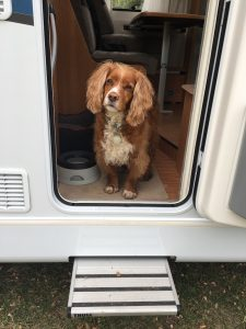 rving with pets pet friendly rv camper rental