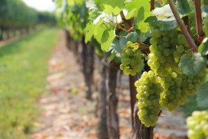 finger lakes upstate new york vineyards romantic rv destination